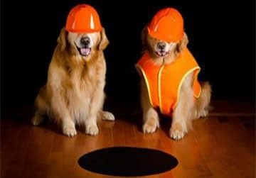 Dogs-in-Hard-Hats